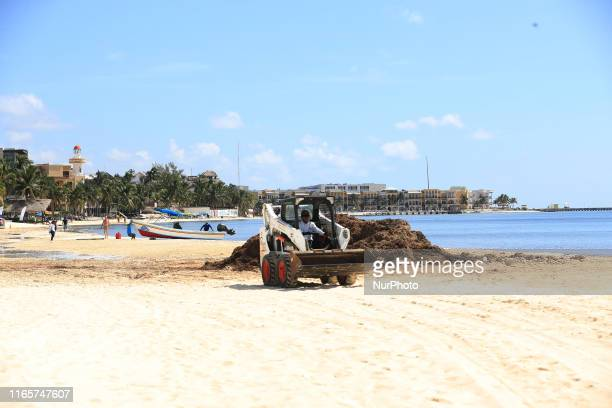 60 Top Sargassum Pictures, Photos, & Images - Getty Images