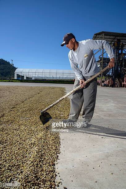 A worker shifts coffee beans drying at the Boa Esperanca farm near Braganca Paulista Brazil on Monday July 29 2013 Coffee prices rose in New York...