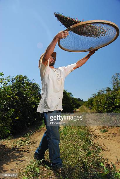 A worker sieving coffee grains after the beans are harvested at a farm in Espirito Santo do Pinhal Brazil Thursday September 14 2006