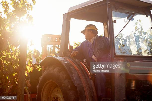Worker sitting in tractor while harvesting grapes
