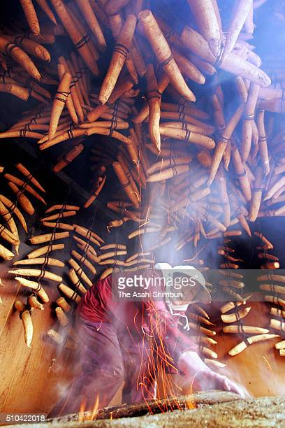 A worker smokes the Japanese radish to produce the 'Iburigakko' on November 14 2005 in Yokote Akita Japan