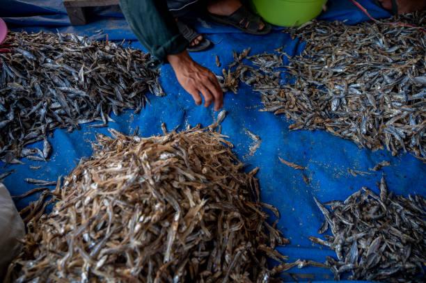 IDN: Marine Fisheries In Indonesia