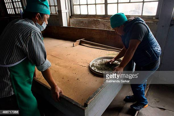Worker sort out fine quality tea leaves after they have been ninety per cent dried in a machine at Makaibari tea factory Set up in 1859 off Kurseong...