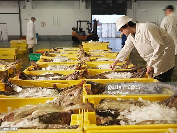 Worker Sorting Fish In Market