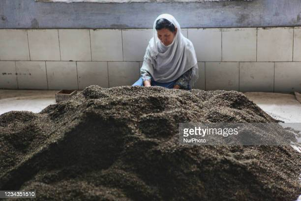 Worker sorts dried and roasted tea leaves at the Puttabong tea factory in Darjeeling, India, on May 31, 2010. Planted in 1852, this is the first tea...