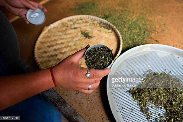 A worker sorts fine tea leaves at Makaibari tea factory Set up in 1859 off Kurseong in the Darjeeling hills the Makaibari estate is the worlds first...