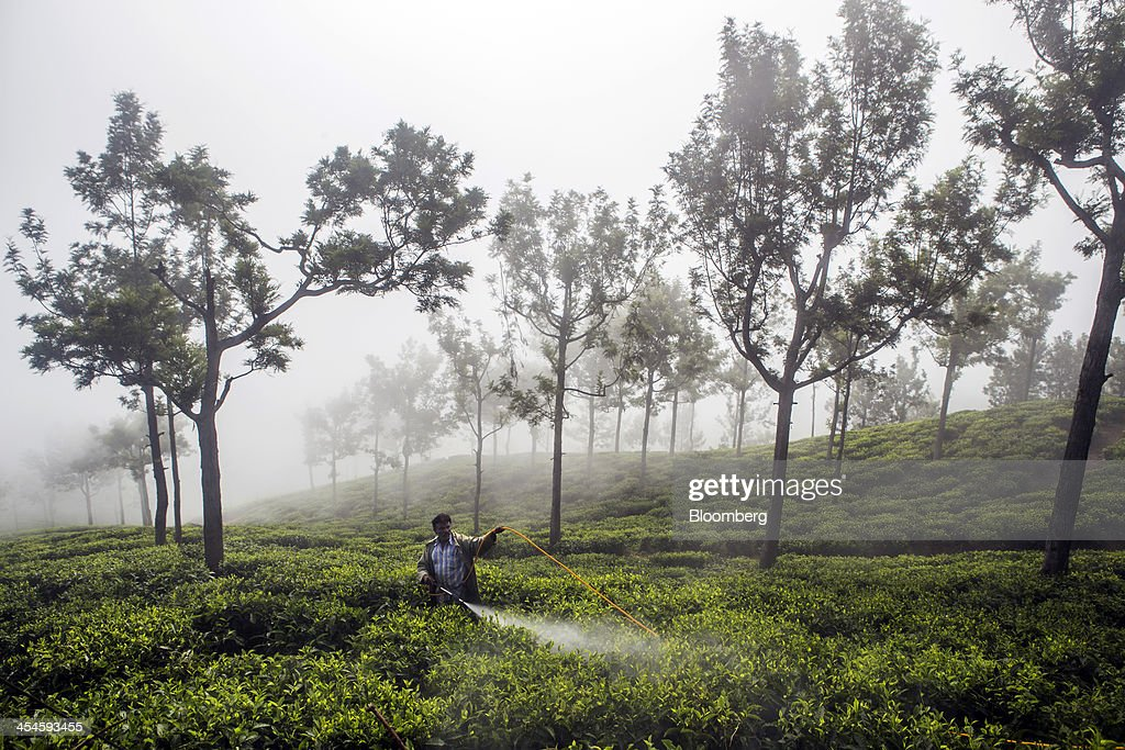 A worker sprays pesticides on a tea plantation in Coonoor, Tamil Nadu, India, on Saturday, Nov. 30, 2013. India is the worlds largest producer of tea after China. Photographer: Prashanth Vishwanathan/Bloomberg via Getty Images