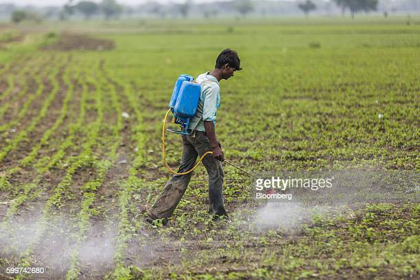 A worker sprays weed killer on plants at a soya bean farm in Dewas Madhya Pradesh India on Tuesday July 5 2016 Farmers in Dewas district where water...