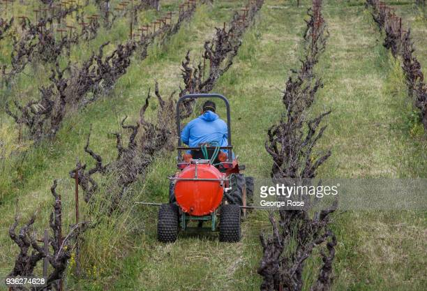 A worker sprays weedkiller around the edges of a zinfandel vineyard on March 9 near Healdsburg California Following a dry winter a series of early...