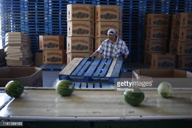 A worker stacks pallets during a watermelon harvest at Frey Farms Inc in Poseyville Indiana US on Thursday Aug 1 2019 Overall the value of watermelon...