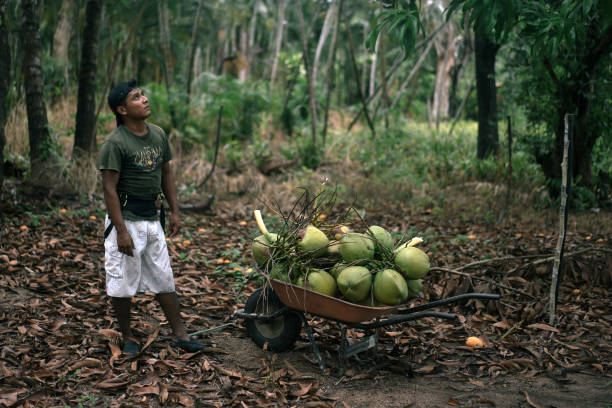 MEX: A Coconut Harvest As Mexican Peso Gains Most vs U.S. Dollar