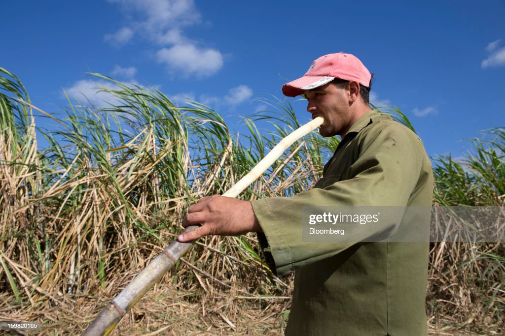 A worker sucks cane juice from freshly cut sugarcane during a harvest in a field near Jatibonico, Cuba, on Sunday, Jan. 13, 2013. Sugar prices fell 16 percent last year as global supplies are forecast to outpace demand for a third year in 2012-13, according to the London-based International Sugar Organization. Photographer: Andrey Rudakov/Bloomberg via Getty Images