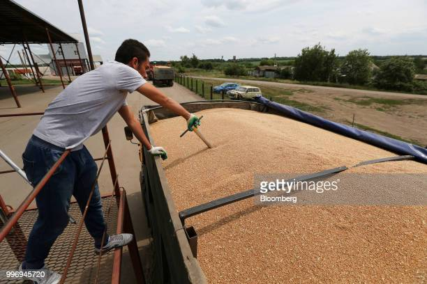 A worker takes a grain sample to measure protein and moisture content during the summer wheat harvest on a farm operated by Ros Agro Plc in Kazinka...