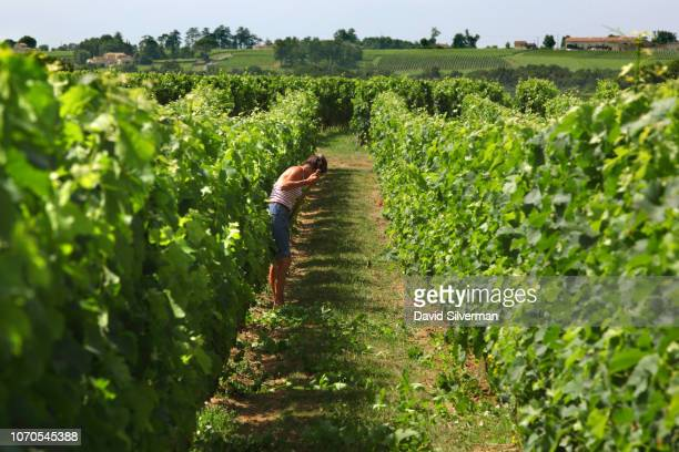 A worker tends to the vineyards at Château des Laurets on June 27 2018 in SaintÉmilion France The Bordeaux Right Bank estate was purchased by Baron...