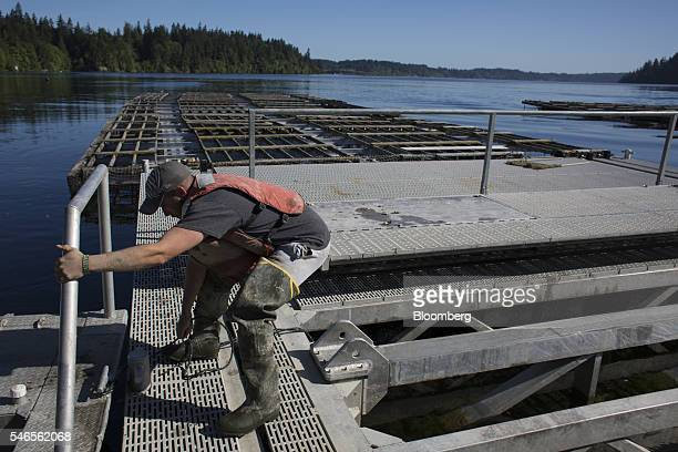 A worker ties a line to a floating growing facility operated by the Taylor Shellfish Co near Olympia Washington US on Tuesday May 10 2016 Geoducks...