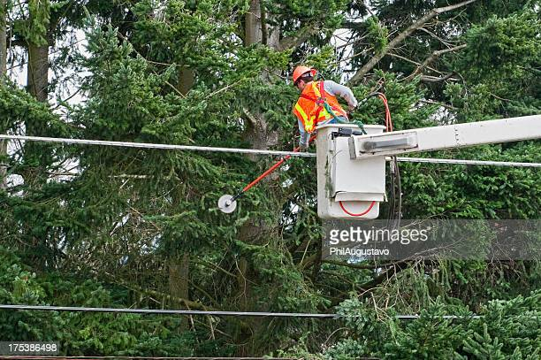 Worker trimming tree branches away from power lines