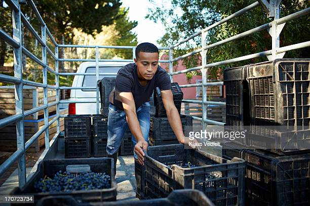 Worker unloading boxes of grapes