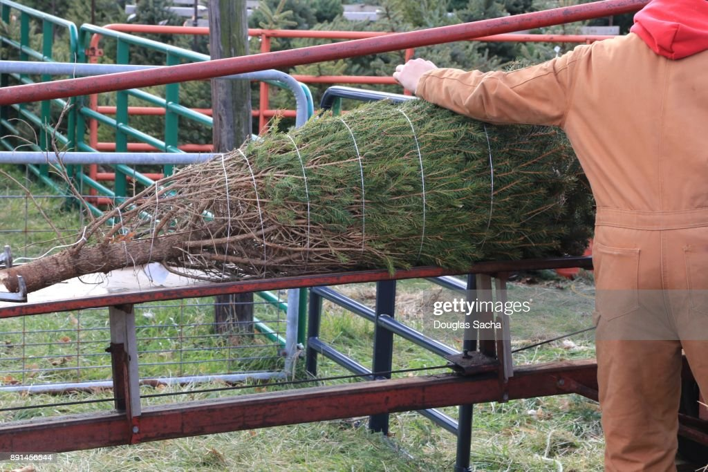 Christmas Tree Baler
