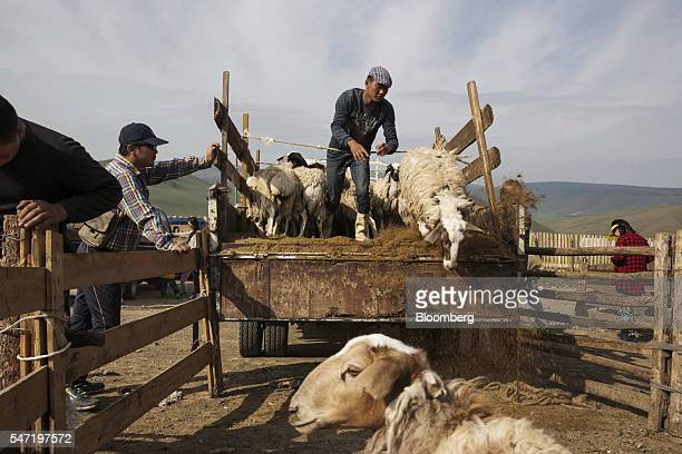 A worker unloads goats and sheep from a truck at a livestock market on the outskirts of Ulaanbaatar Mongolia on Wednesday July 13 2016 The nation's...
