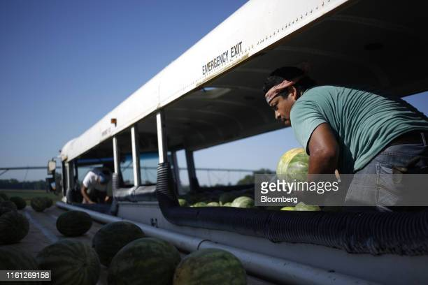 A worker unloads watermelons from a repurposed school bus during a harvest at Frey Farms Inc in Poseyville Indiana US on Thursday Aug 1 2019 Overall...