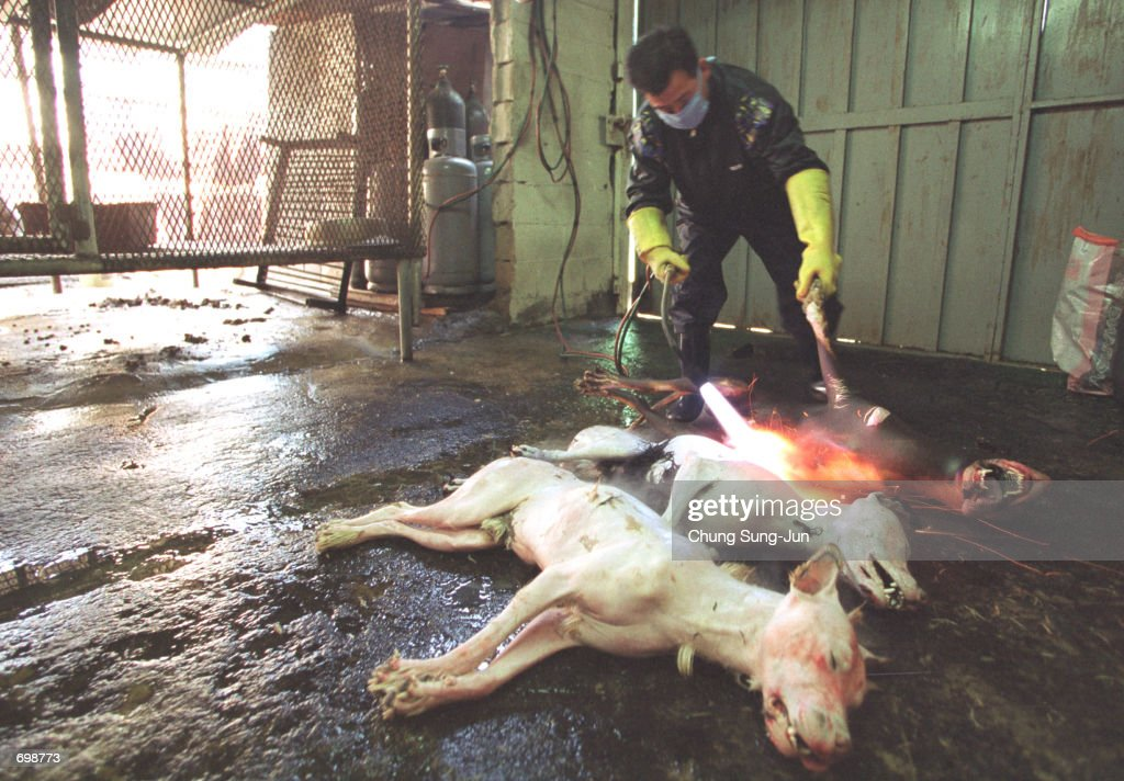 Koreans Dogmeat-Eating Tradition Under Fire : News Photo