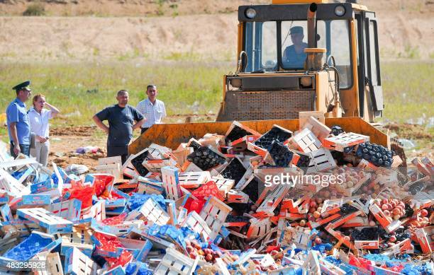 A worker uses a bulldozer to crush crates of peaches outside the city of Novozybkov about 600 km from Moscow on August 7 2015 Russian officials on...