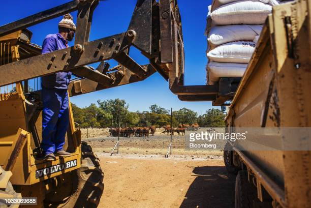 A worker uses a forklift to load bags of animal feed into a truck on the Ehlerskroon farm outside Delmas in the Mpumalanga province South Africa on...