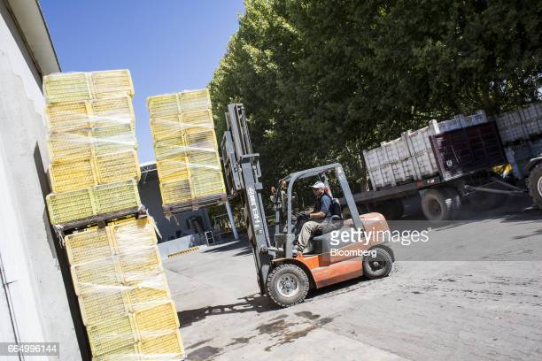 A worker uses a forklift to stack crates of harvested grapes at the Bodega Santa Julia production facility in Mendoza Argentina on Tuesday March 23...