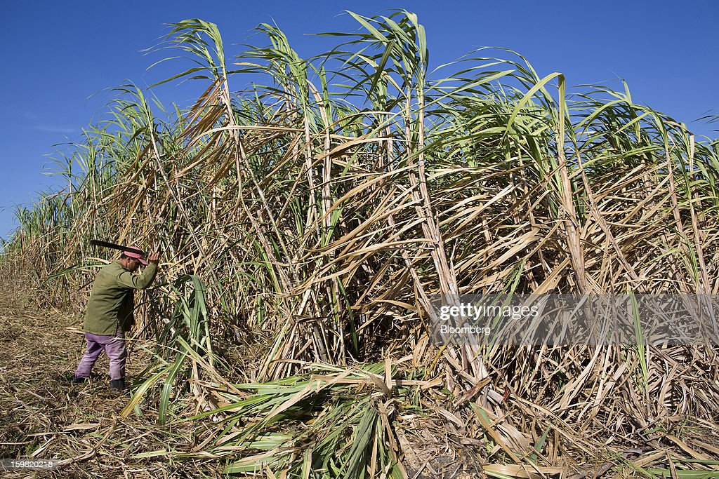 A worker uses a machete to harvest sugarcane in a field near Jatibonico, Cuba, on Sunday, Jan. 13, 2013. Sugar prices fell 16 percent last year as global supplies are forecast to outpace demand for a third year in 2012-13, according to the London-based International Sugar Organization. Photographer: Andrey Rudakov/Bloomberg via Getty Images