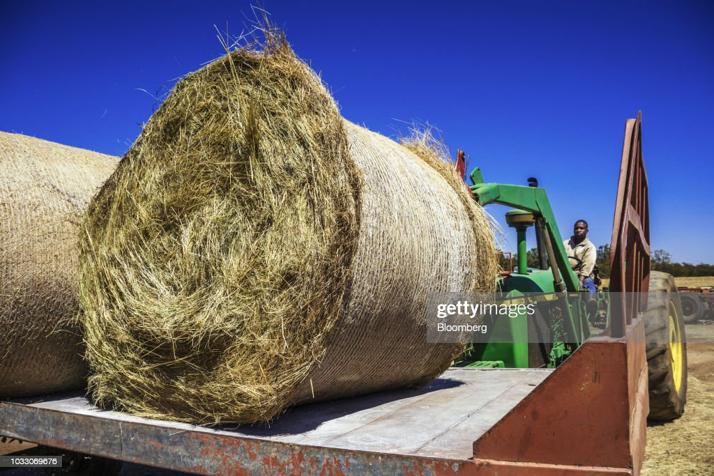 A worker uses a tractor to lift bails of hay into a truck on the Ehlerskroon farm, outside Delmas in the Mpumalanga province, South Africa on Thursday, Sept. 13, 2018. A legal battle may be looming over plans by South Africas ruling party to change the constitution to make it easier to expropriate land without paying for it, with widely divergent views over the process that needs to be followed. Photographer: Waldo Swiegers/Bloomberg via Getty Images