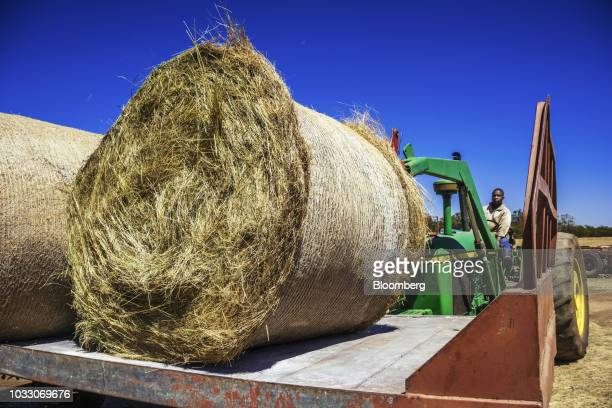 A worker uses a tractor to lift bails of hay into a truck on the Ehlerskroon farm outside Delmas in the Mpumalanga province South Africa on Thursday...