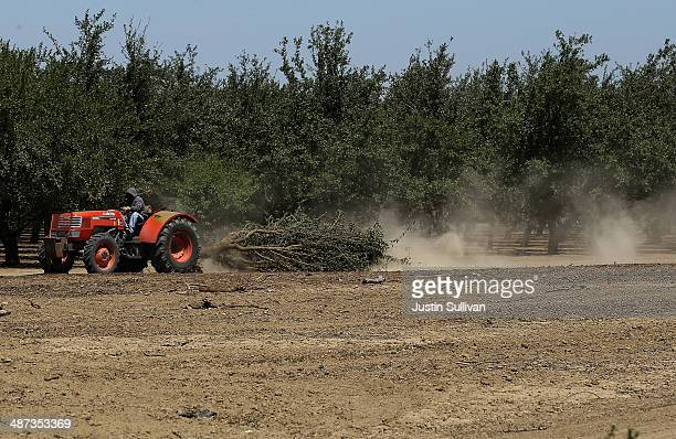 A worker uses a tractor to pull an uprooted almond tree at a farm on April 29 2014 near Mendota California As the California drought continues...