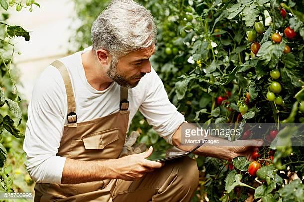 Worker using digital tablet at organic farm