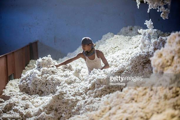 A worker wades through cotton at a ginning mill in Pilibanga Rajasthan India on Wednesday Nov 5 2014 India may topple China as the world's largest...