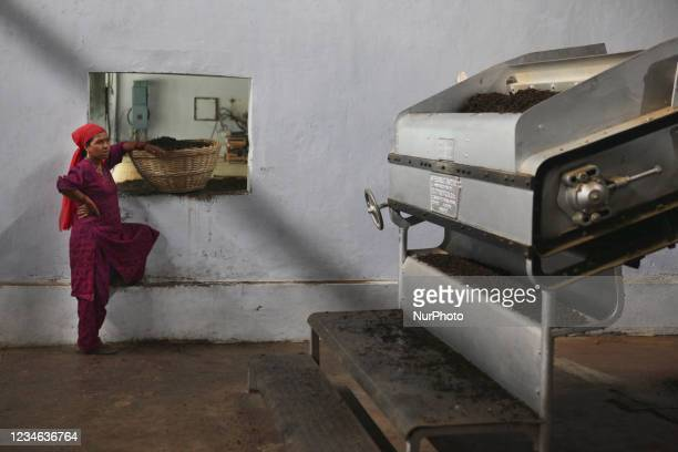 Worker waits for a basket to be filled with freshly dried tea leaves before putting them into a machine to sort the tea by grade and quality at the...