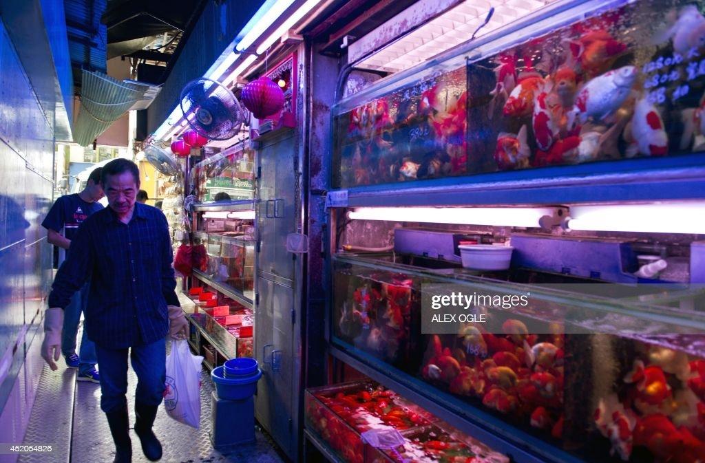 HONG KONG-LIFESTYLE-ANIMAL-FISH : News Photo