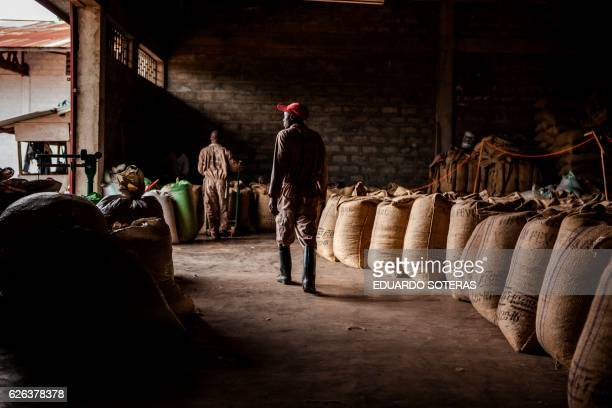A worker walks past sacks of beans stored at the SCAK cocoa processing plant in Beni on November 14 2016 Cocoa farming in the Beni area started in...