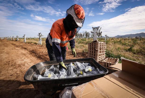 AUS: Solar Farm As Australians Favor Clean Energy Over Gas for Economic Revival