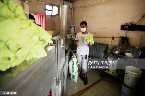 A worker wears protective mask while puts the corn dough inside of a tortillamaking machine The Tortilleria Fanny make tortillas of differents...