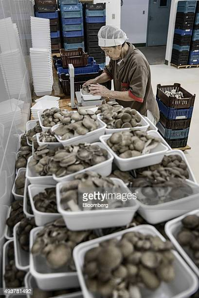 A worker weighs a container of premium shimeji mushrooms at the Urakami Cogumelos facility in Mogi das Cruzes Brazil on Thursday Oct 15 2015 Urakami...