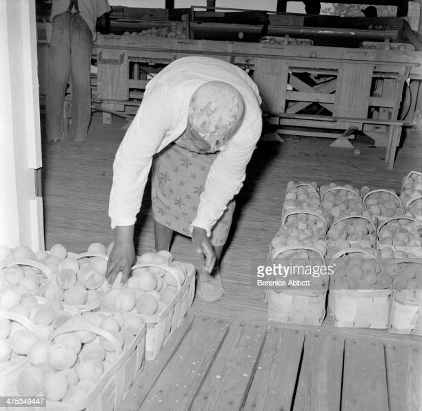 Worker with Baskets of Peaches South Carolina United States 1954
