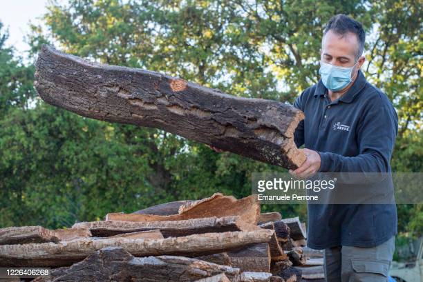 Worker with the Covid-19 protective mask arranges the cork in a way for conservation and subsequent processing on May 22, 2020 in Tempio Pausania,...