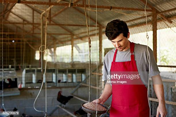 Worker working at poultry farm