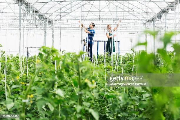 Workers adjusting sprinklers in greenhouse