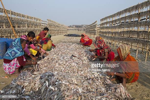 COX'S BAZAR BANGLADESH JANUARY 1 Workers are busy to drying fish under sun at Naziratek in Cox's Bazar on January 01 2016 Naziratek on the beach at...