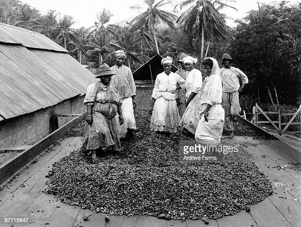 Workers at a coffee plantation Port of Spain Trinidad