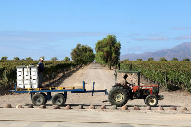 ARG: Argentinian Wineries Bring In the Harvest