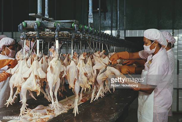 Workers busy on the production line at the CPCharoen Pokphad poultry farm and processing plant in Bangkok Thailand circa 1987