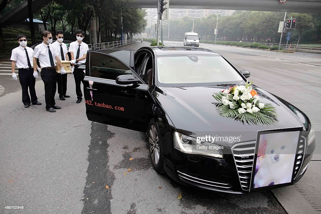 A Dogs Funeral Bought Online With Over 8000 Rmb In Shanghai News P O