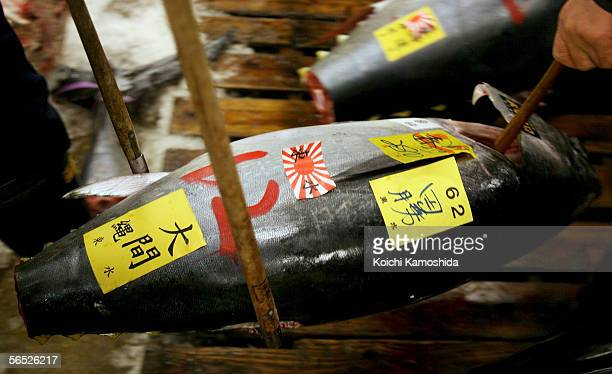 Workers carry a large tuna fish during a new year's first auction at the Tsukiji fish wholesale market on January 5 2006 in Tokyo Japan Tsukiji...